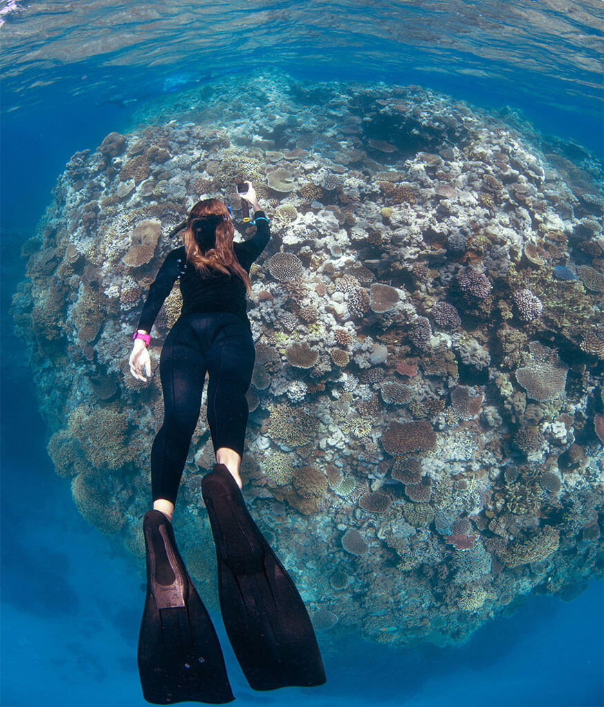 Diver taking part in the Great Reef Census @ Milln Reef, October 2020Image: Citizens of the Great Barrier Reef / Gabriel Guzman